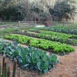 Como hacer una huerta orgánica en casa