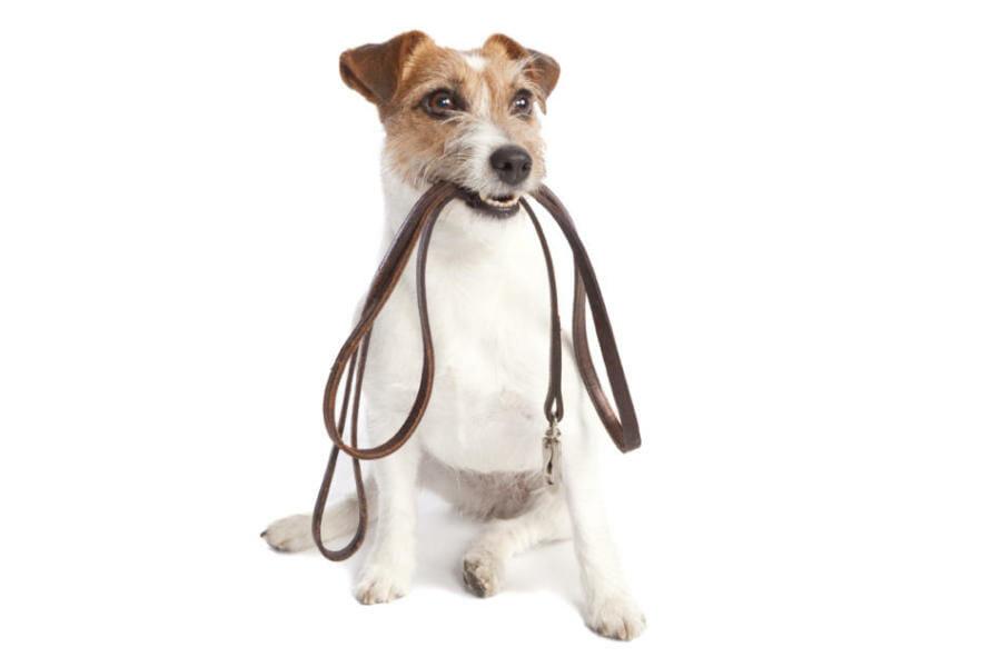 como adiestrar a mi perro